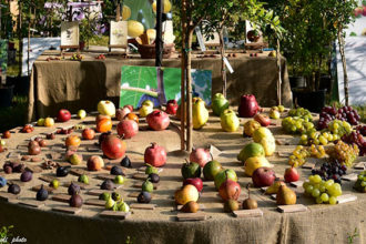 Valtidone Wine Fest il 2 settembre la più grande rassegna di vini piacentini