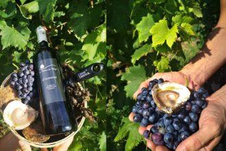 ostriche e vino rosso, abbinamento che sfida un tabù proposto da I love Ostrica
